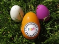 4-7-12 Easter Picnic